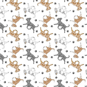 Trotting merle smooth coat Chihuahuas and paw prints - white