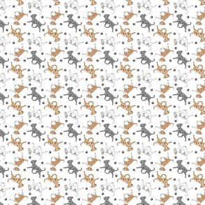 Tiny Trotting merle smooth coat Chihuahuas and paw prints - white