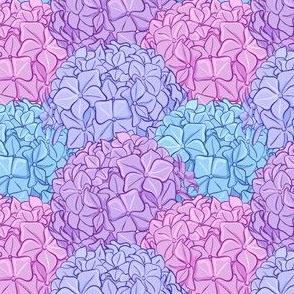 Blue pink purple hydrangea