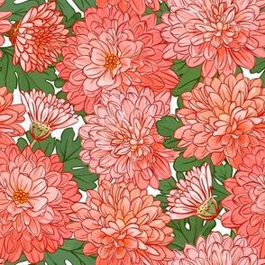 Chrysanthemum - orange 2