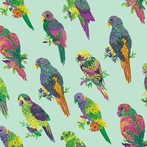 Parrots (pastel green background)