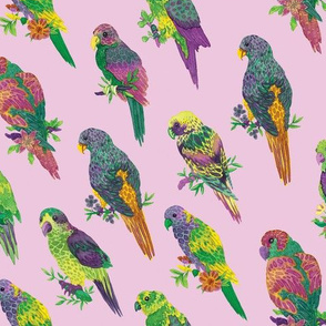 Parrots (dusty pink background)
