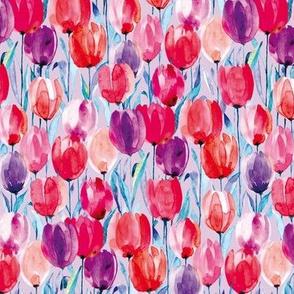 tulips magenta L