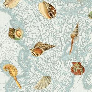 Shells ocean larger