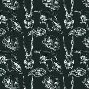 Animal Skulls Dark