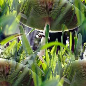Green Spored Lepiota