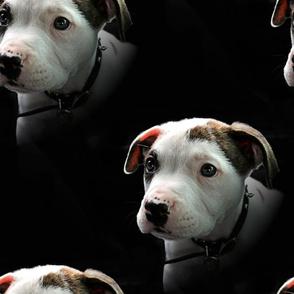 Puppy T-Bone