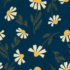 chamomile flower on dark blue