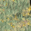Rocky_mountain_horse_in_wildflower_field_for_pillow