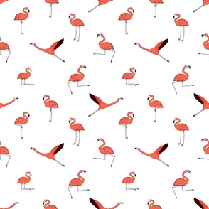 Doodle active flamingos, dancing, fly, sleep, rest, relax, dream, walk