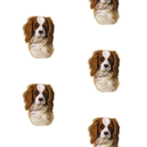 Cavalier King Charles spaniel dog Dani-ed