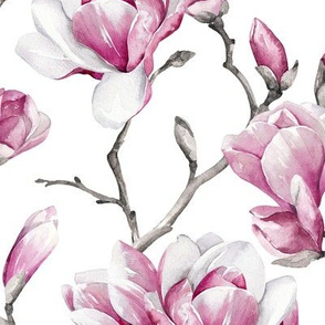 Magnolias / White Background / Large Scale