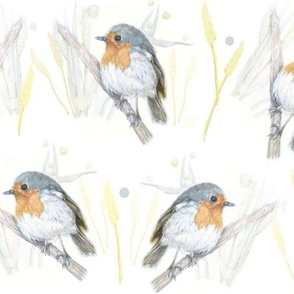 Little Robin Woodland Birds