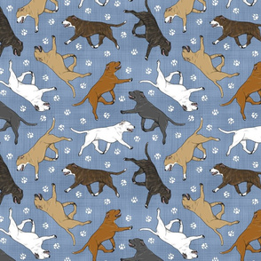 Trotting Staffordshire Bull Terriers and paw prints - faux denim