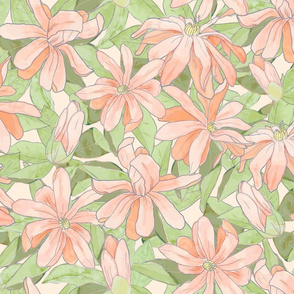 Gentle Star Magnolia