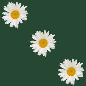 Daisy_a_day%2c_forest_green