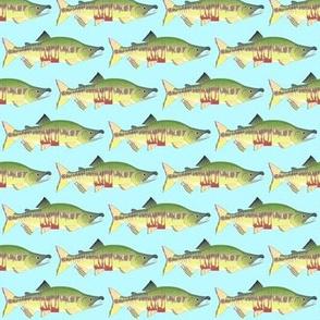 Chum Salmon lt blue sm