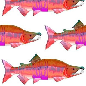 Chum Salmon Red Shift