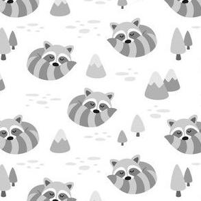 Grey Sleeping Raccoons