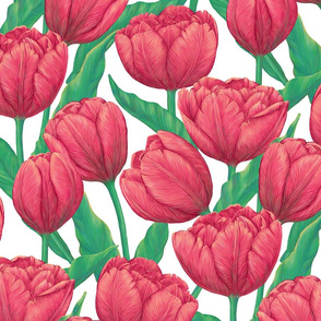 Bright red tulips - spring floral