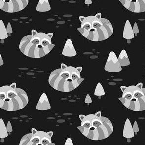 Grey Sleeping Raccoons on Black