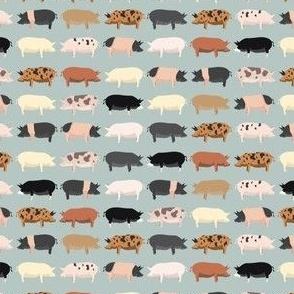 Farmhouse Pigs