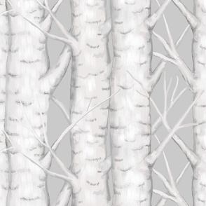 Birch Trees - Medium Large