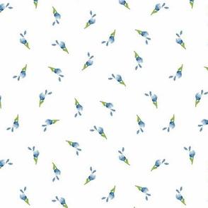 Blue Medium Plumbago Buds