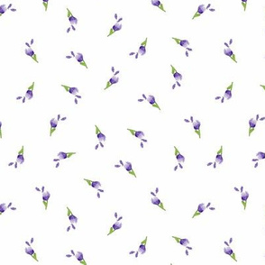 Lavender Medium Plumbago Buds