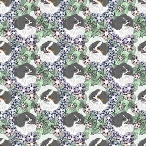 Floral Black Parti Pomeranian portraits