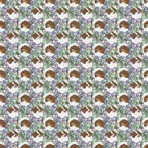 Small Floral Brown Parti Pomeranian portraits