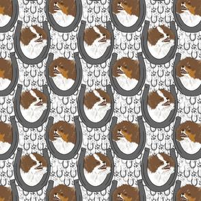 Brown Parti Pomeranian horseshoe portraits
