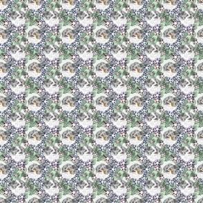 Small Floral Blue Merle Parti Pomeranian portraits