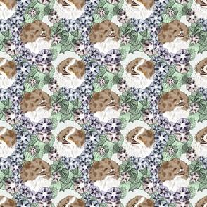 Floral Brown Merle Parti Pomeranian portraits