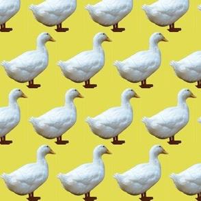 White Duck on yellow