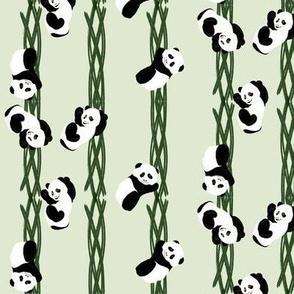 Climbing Pandas - Green