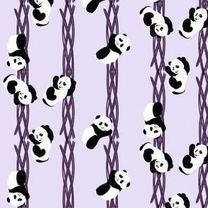 Climbing Pandas - Purple