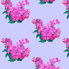 C.Cooley Garden Pink