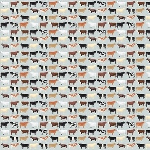 Birds and Lemons