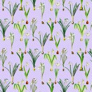 Snowdrops and dots on lavender ground