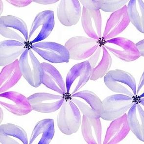december flowers Violet