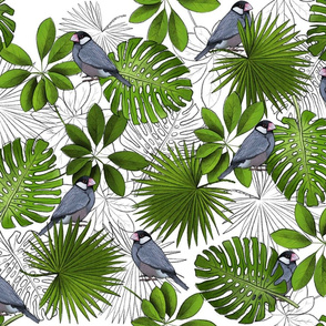 Java Sparrows, Tropical Leaves, and Tropical Leaf Outlines on White - Large
