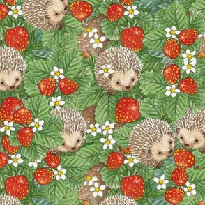 Hedgehogs and stawberries