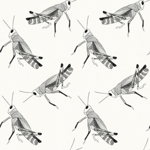 Grasshoppers - Large Scale  {Black}