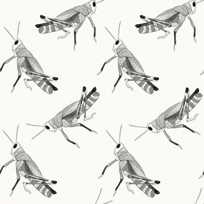 Grasshoppers - {Black}