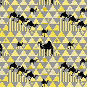 Camels Pyramid black,gray and yellow