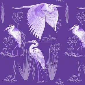 Herons Purple