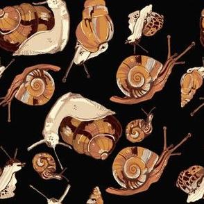 snail pattern-black