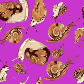 snail pattern-pink