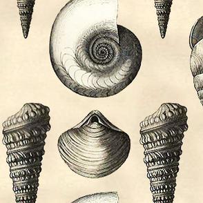 Vintage seashells big